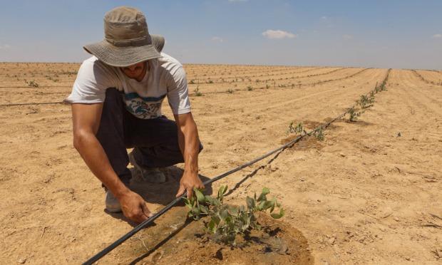 Irrigação_Israel