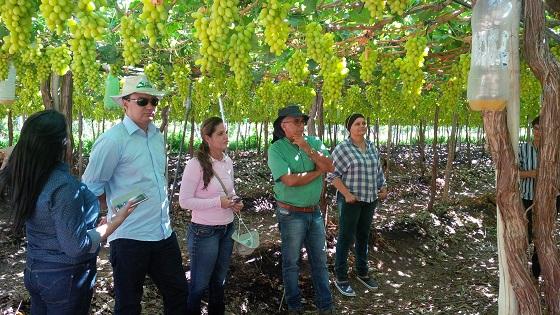Produção de frutas, como uva e manga, é grande na região