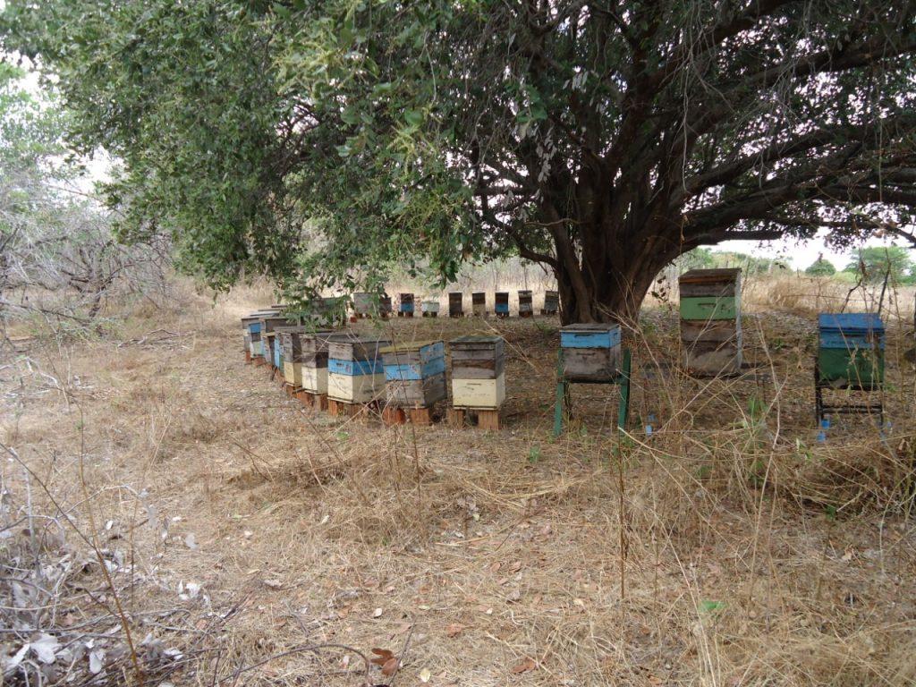 Dia de Campo em Apicultura (4)